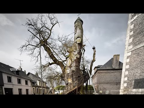 5 Most Unusual Trees in The World