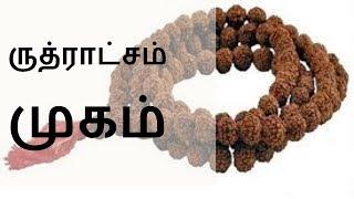 ருத்ராட்சம் முகம் - Siththarkal Manthiram- Sithar- sithargal-siddhar-siththar - SIDHDHARKAL