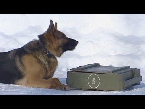 كلاب الجيش الروسي تستخدم الموبايل
