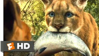 A Dog's Way Home (2018) - Big Kitten Scene (2/10) | Movieclips