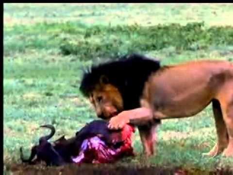 Domingão Aventura Animais selvagens 03 10 10 Parte 1
