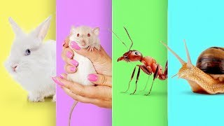 How to Make a Mini Animal Farm at Home
