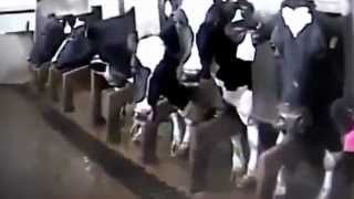 تعذيب الحيوانات في امريكا بشكل لا يصدق!!!!