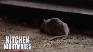 Gordon Accused Of Planting Dead Mouse at Restaurant Door - Kitchen Nightmares