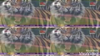 Bangla cricket song mar chokka