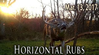 Horizontal Rubs - Top Bow Shooting Tips | Midwest Whitetail