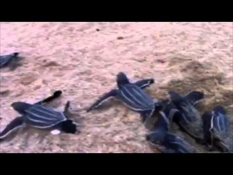 Nacimiento de Tinglares en Ocean Park el 4 de julio de 2011
