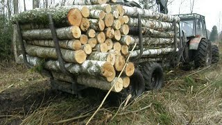 Belarus Mtz 1025.2 + Palms 840  with a full trailer of wood in the forest