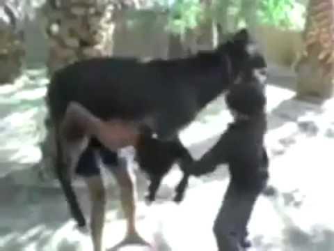 Xxx Mp4 Gadhey Ke Uper Gadha A Boy Hold Donkey On His Shoulders 3gp Sex