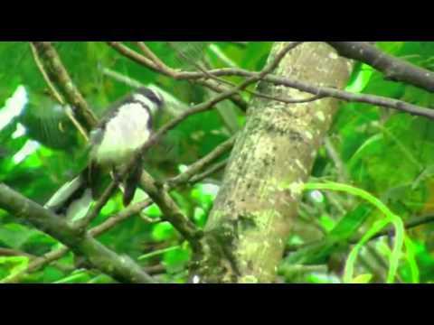 orman da kuş sesleri