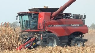 Case IH 8230 Combine with Crow Creek Farms on 10-1-2014