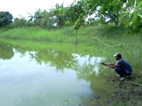 pescando cachamas