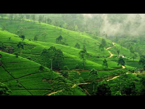 Xxx Mp4 Derek XXX Pakistan Tea Garden Original Mix 3gp Sex
