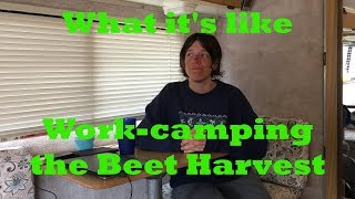 Is Working The Beet Harvest Worth It?