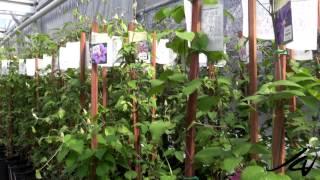 The Greenery Garden Centre -  Bedding Plant Nursery  -  YouTube