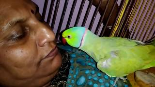 Lovely Mitthu (Parrot)