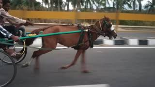 Vaniyambadi horse atn