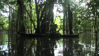 Amazon Jungle-High Definition River Canoe Journey