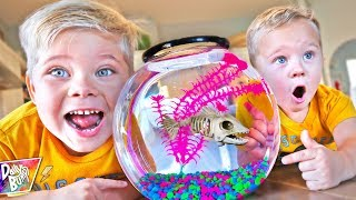 We Dug Up Our Zombie Pet Fish! (HASHTAG BRUCE NORBERT!)