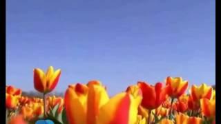 دشت گل های لاله، هلند