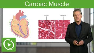 Cardiac Muscle (Myocardium)  – Histology | Medical Education Videos