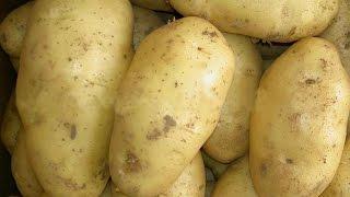 البطاطس   و علاج كدمات العين و التهابات الجلد