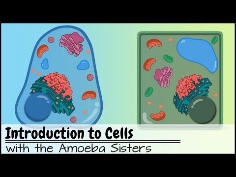 Introduction to Cells: The Grand Cell Tour