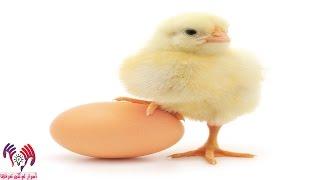لهذا السبب الغريب مُنعت البيض في أحد ولايات النمساء !
