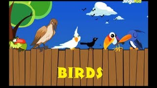 Learn About BIRDS | Nursery Rhymes | Preschool | Kids | Kindergarten