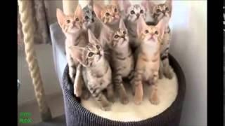 """funny videos """"cats"""" 2014 , مقاطع قطط مضحكة جدا"""