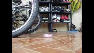 Plastic Bottle of yakult vs bike's tire