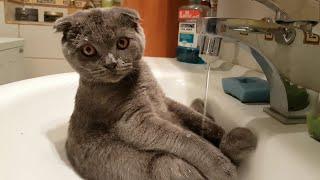 Cat Takes Bath in Sink