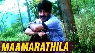 Maamarathila Full Song | கரிசக்காட்டு பூவே | Karisakattu Poove Tamil Movie Songs | Ilaiyaraja Hits