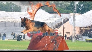 German Shepherd Dog Show | Hilarious Excitement at Dog Show 2018 | Islamabad Pakistan