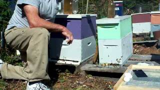 BEEKEEPING,American foulbrood powdered sugar.Small Hive Beetle traps Sugar water feeding John Pluta