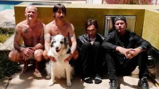 Sick Love Red Hot Chili Peppers en español, traducida y subtitulada