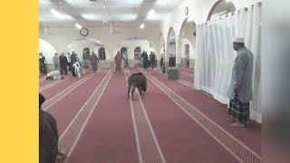 Gara-Gara Amukan Babi Hutan, Masjid Belanja RM34,000 Tukar Karpet Baru