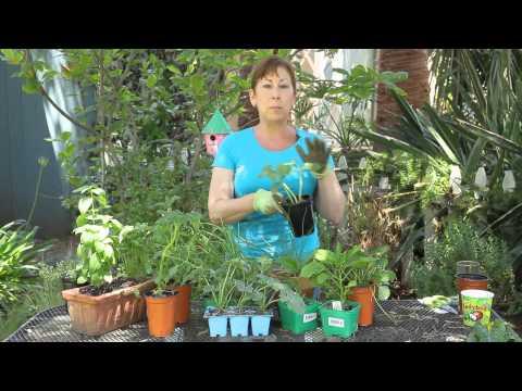 Xxx Mp4 Summer Vegetable Garden Planting For Southern California Garden Space 3gp Sex