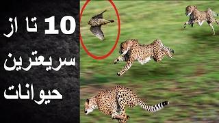 ۱۰ تا از سریعترین حیوانات