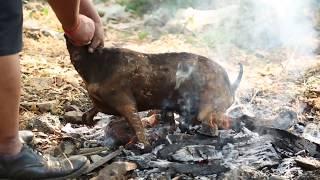 बकरे का मीट  मसालेदार ढाबा स्टाइलCooking Full Goat Roast  with smoke TADKA (India)