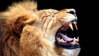 Lion Roar 2 - Sound Effect