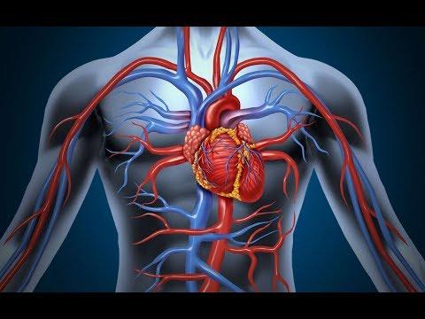 Xxx Mp4 صحتك أولا ً جهاز الدوران القلب و الأوعية الدموية 3gp Sex