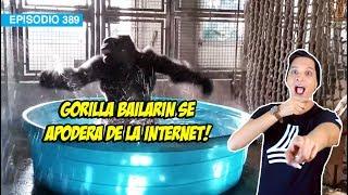 Gorilla Bailarin! WDF?!?!?!?!?