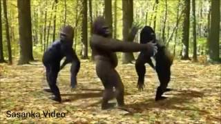 monkey dance with odia song
