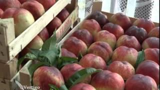 Problemi sa cenama i plasmanom jabuka   U nasem ataru 559
