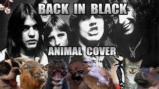 AC/DC - Back In Black (Animal Cover)