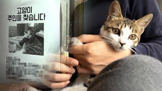 7번째 고양이 주인찾기와 발톱깍기 귀청소 Finding Cat's Owner【수리노을 SURI&NOEL】