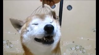 Dogs Reactions To Head Massager Compilation || NEW