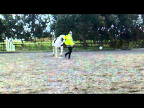 Xxx Mp4 Playing Around With Horse D Xx 3gp Sex