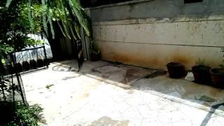 [Hindi] Infocus M810 13 MP Rear Camera sample video in FULL HD 1080p